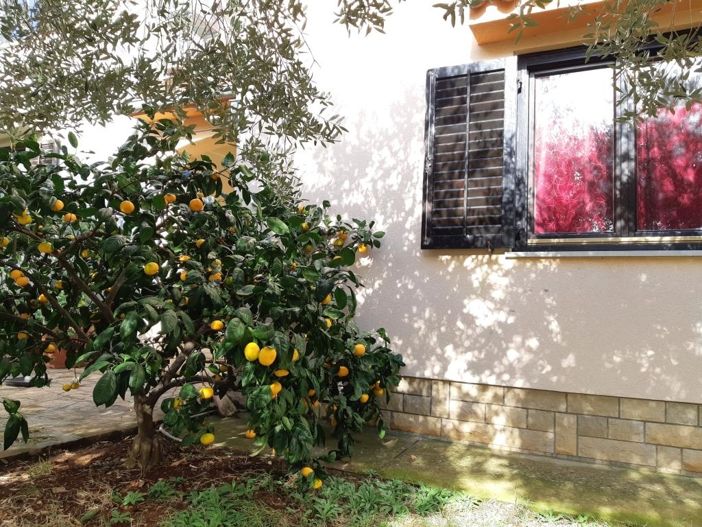 mandarina-kuca